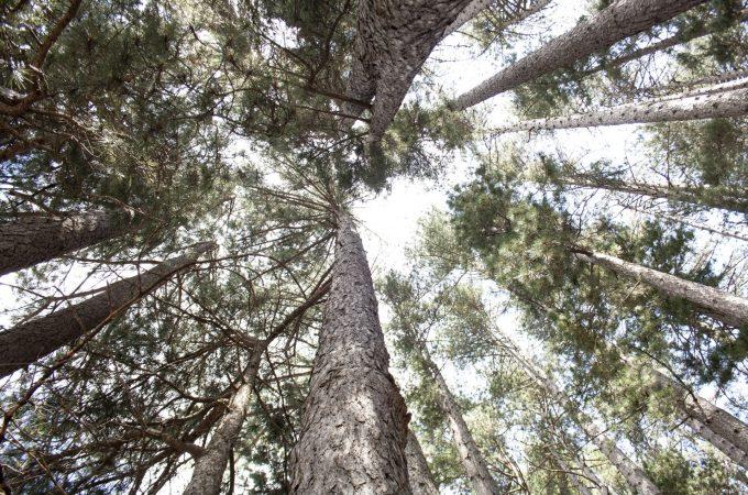 Parco Nazionale Della Sila: un Blog Tour alla scoperta del polmone verde della Calabria
